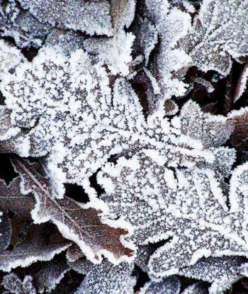 საქართველოში ტემპერატურა -20 გრადუსამდე დაეცემა - მომდევნო დღეების ამინდის პროგნოზი