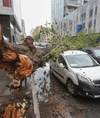 დამანგრეველი ქარიშხალი მოსკოვში: 14 დაღუპული, მოგლეჯილი ხეები, დაზიანებული შენობები და მანქანები